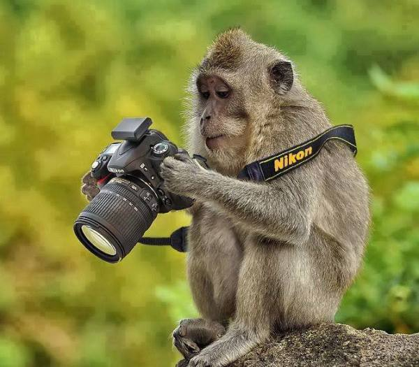 Monkey with a camera