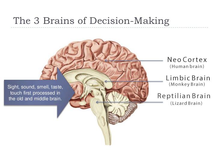 3 brains graphic