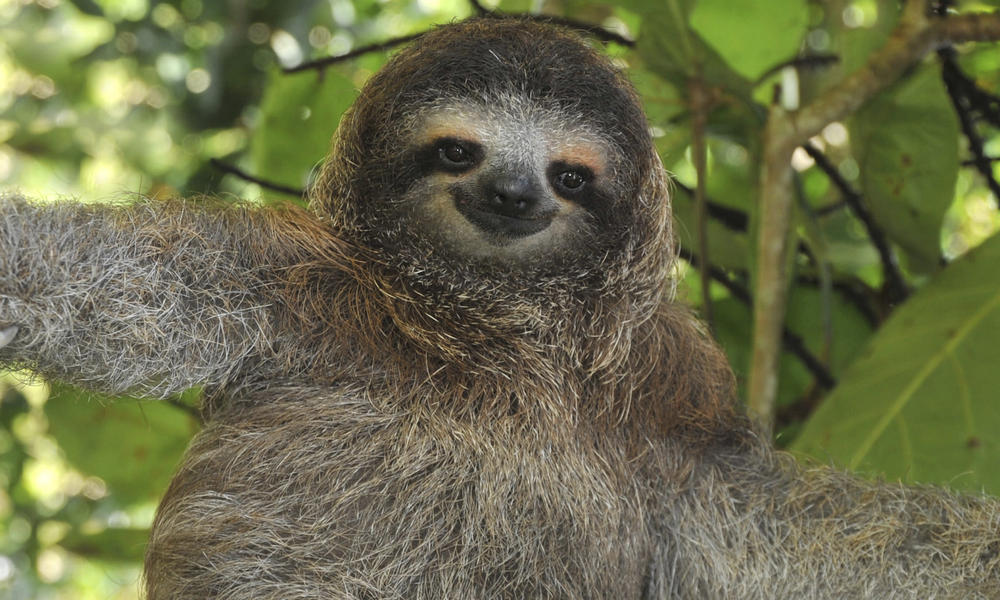 why you shouldnt use wordpress sloth